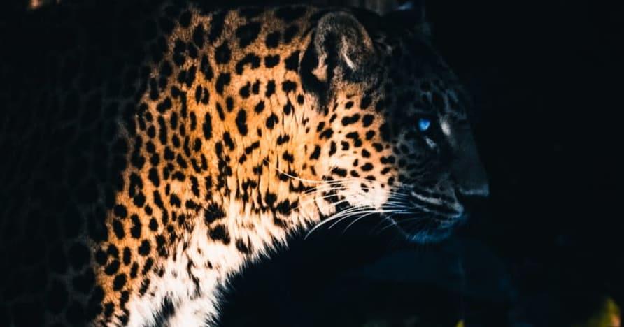 Yggdrasil Partners ReelPlay para liberar o Jaguar SuperWays de Bad Dingo